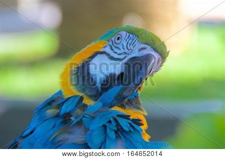 Close-up of blue and yellow macaw in the park
