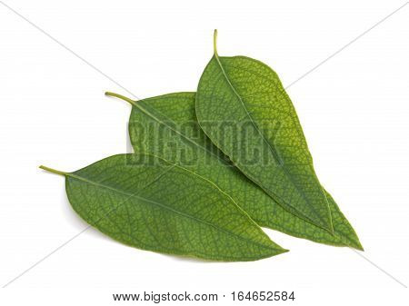 Eucalyptus Leaves Isolated