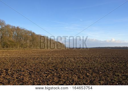 Plow Soil And Woodland