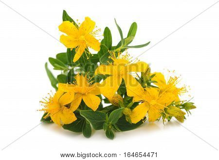 St. John's wort (Hypericum perforatum) flowers isolated