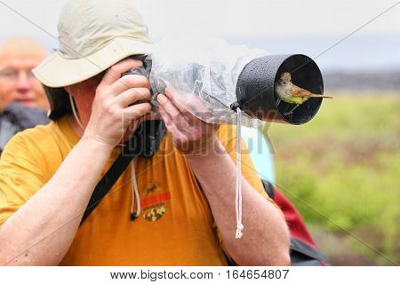 Santiago Island, Ecuador - April 22: Friendly Galapagos Flycatcher Sitting On A Lens Hood Of Unident