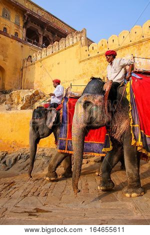 Amber, India - November 13: Unidentified Men Ride Decorated Elephants From Amber Fort On November 13