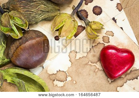 A background with a fresh raw chestnut, a chocolate heart and dried plants and place for your text.