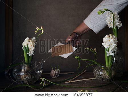 three white hyacinth in transparent vases, a female hand with scissors on a dark background.