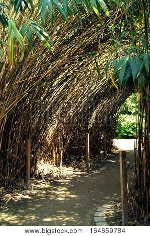 Alley of high bamboo in the park