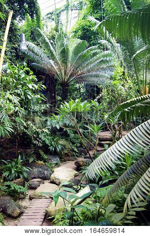 Different types of green plants in the tropical greenhouse
