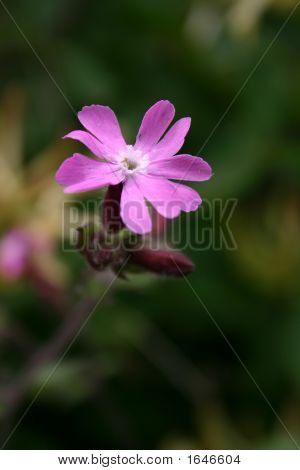 Single Purple Flower