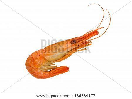 Cooked shrimp isolated on white background. Boiled shrimp. Prawns. Seafood