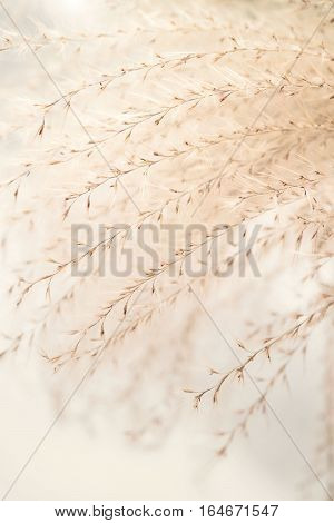 Warm toning image with soft focus of ornamental plants grass similar to Stipa with seeds, ornamental plants in rock garden, in park. Vertical