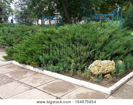 A flower bed with thick twine growing juniper.