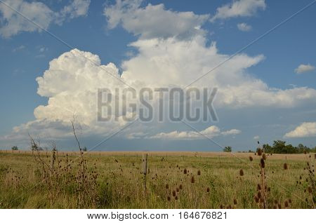 Country field on a sunny day with puffy white clouds