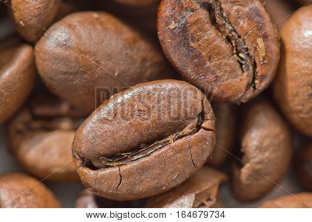 Some coffee bean varieties of Arabica closeup