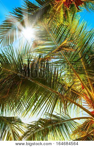 Vertical background of Sun over green palm leaves on Maldives