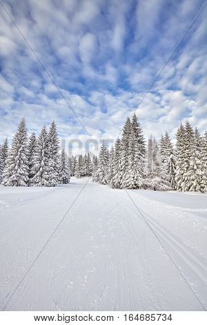Winter Landscape With Cross-country Skiing Tracks.