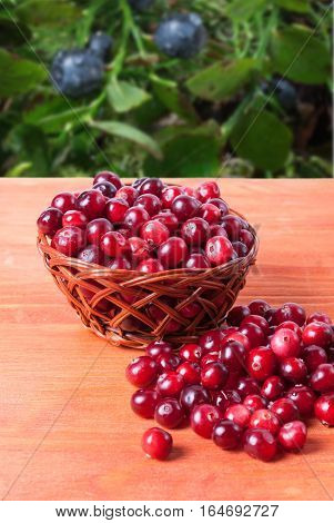 Basket with cranberries on a wooden background with the image of wild berries in the background