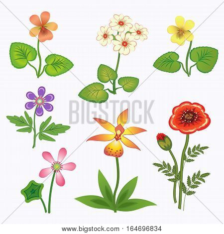 Flower set. Nasturtium, primula, viola, anemone, poppy, chamomile, daisy, orchid. Spring flowers. Floral symbols with leaves. Color icons. May be used in cuisine. Vector isolated.
