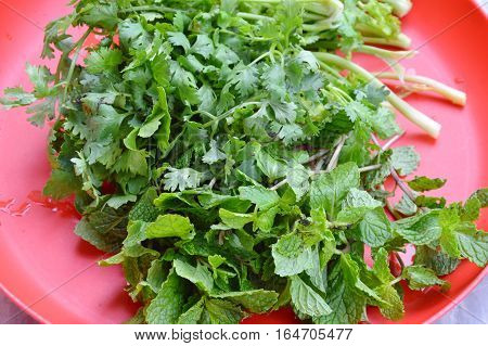 parsley and kitchen mint on red plastic tray