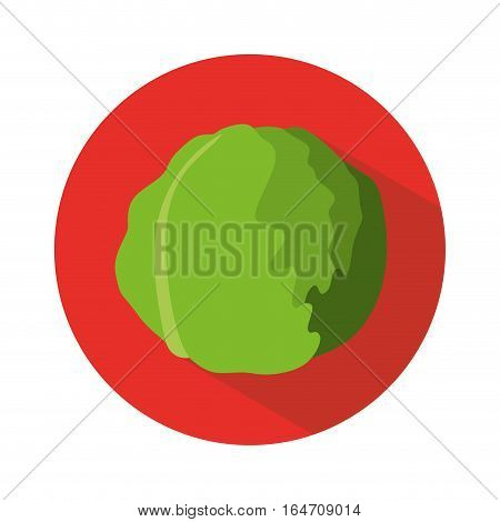lettuce vegetable icon over red circle and white background. colorful design. vector illustration
