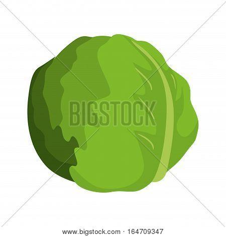 lettuce vegetable icon over white background. colorful design. vector illustration