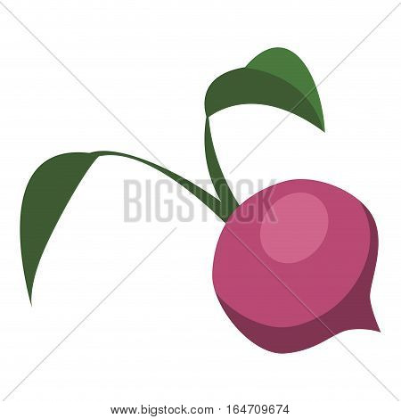 beetroot vegetable icon over white background. colorful design. vector illustration