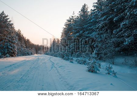 Winter road among pines at sunset - snow covered ural forest, wide angle