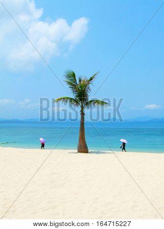 Single palm and sea in Hainan ,China