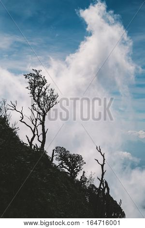 Vertical scene of silhouette damaged trees on mountain with white cloud and blue sky