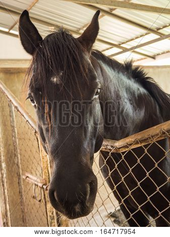 Black Horse in the stable in the zoo