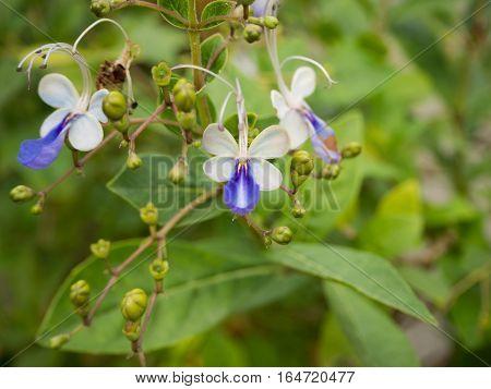 Violent flower with leaf in the garden