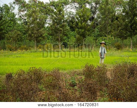Scarecrow in the rice field, forest bakcground