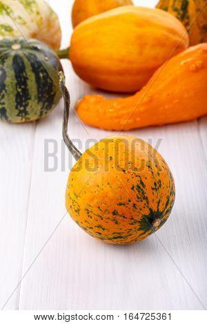 Little colorful ornamental pumpkins squash gourds. Decorative pumpkins. Mini gourds on white. Cucurbita pepo.