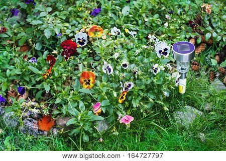 Small solar garden light with multicolored pansy flowers