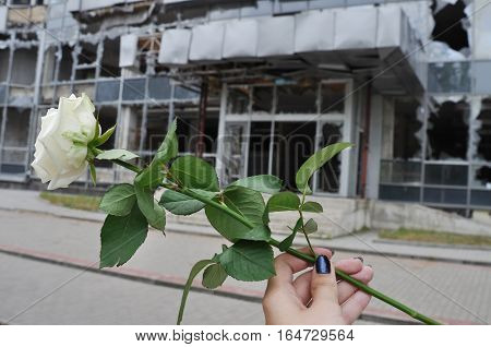 white rose in hand on background of the building which has destroyed war in Donetsk
