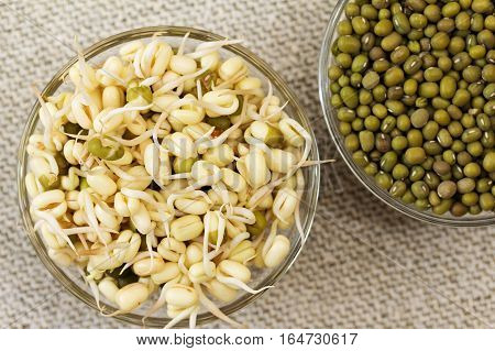 Growing mung bean sprouts. Mung bean sprouts and mung bean dry. Focus on sprouts.