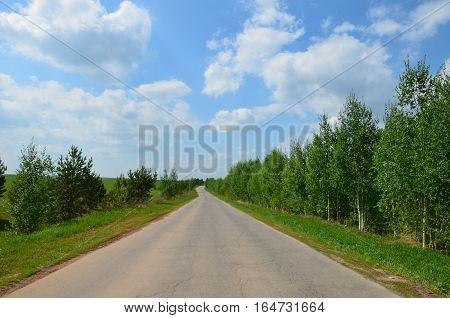 Fields Near The Garden In Russia