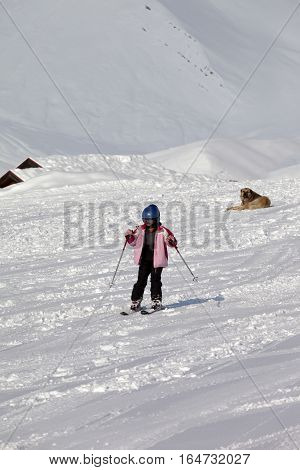 Little Skier And Dog On Ski Slope At Sun Winter Day