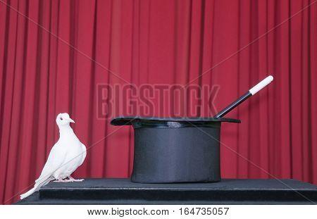 White Pigeon And Magic Hat