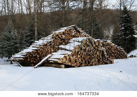 Wood for the sawmill or as a renewable source of energy