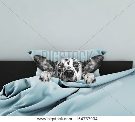 Cute dog sleeping and afraid of something