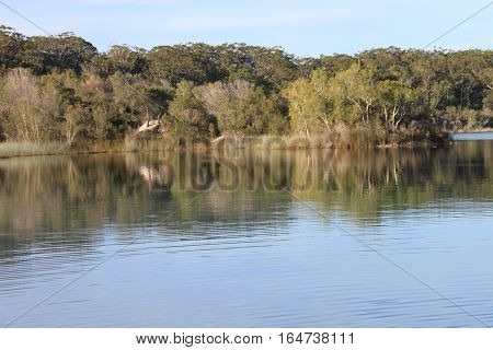 river at fraser island at australia with trees