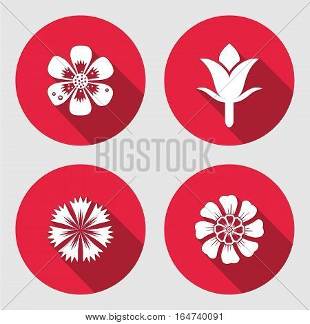 Flower icons set. Chamomile, daisy, blue poppy, cloves. Floral symbols. Round circle flat sign with long shadow. May be used in cuisine. Vector