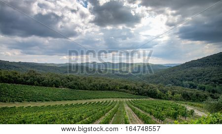 Tuscany, Italy - September 05, 2014: A wineyard in autumn in tuscany, Italy