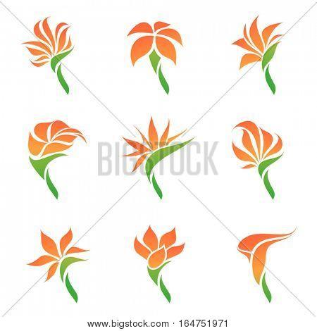 Tropical flowers. Elements for design. Vector illustration.