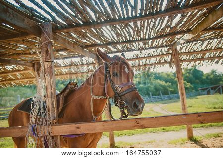 beautiful brown horse standing in a corral in the summer