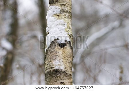 Clsoeup of a Tree in Winter. Nature in Winter