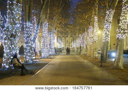 Illuminated Plane Tree Alley