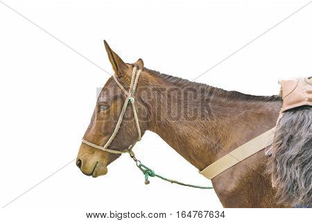 Side view body part mule isolated on white background