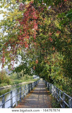 Monza (Brianza Lombardy Italy): road for pedestrian and bicycle along the canal Villoresi at fall