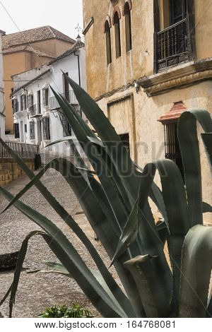 Ronda (Andalucia Spain): old typical street with white houses and a plant