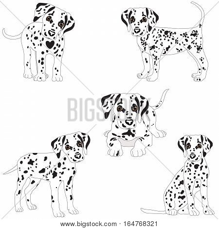 Dalmatians, cute puppy, sad. Vector Illustration Portrait of Dalmatian Puppy. Dog isolated